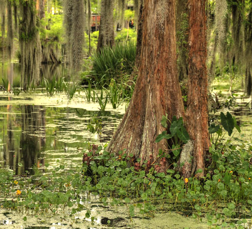 New Orleans Airboat Swamp Tours